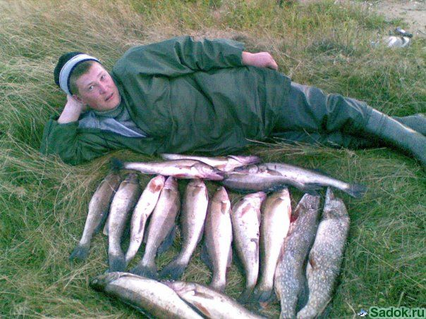 мышкин рыболовная база